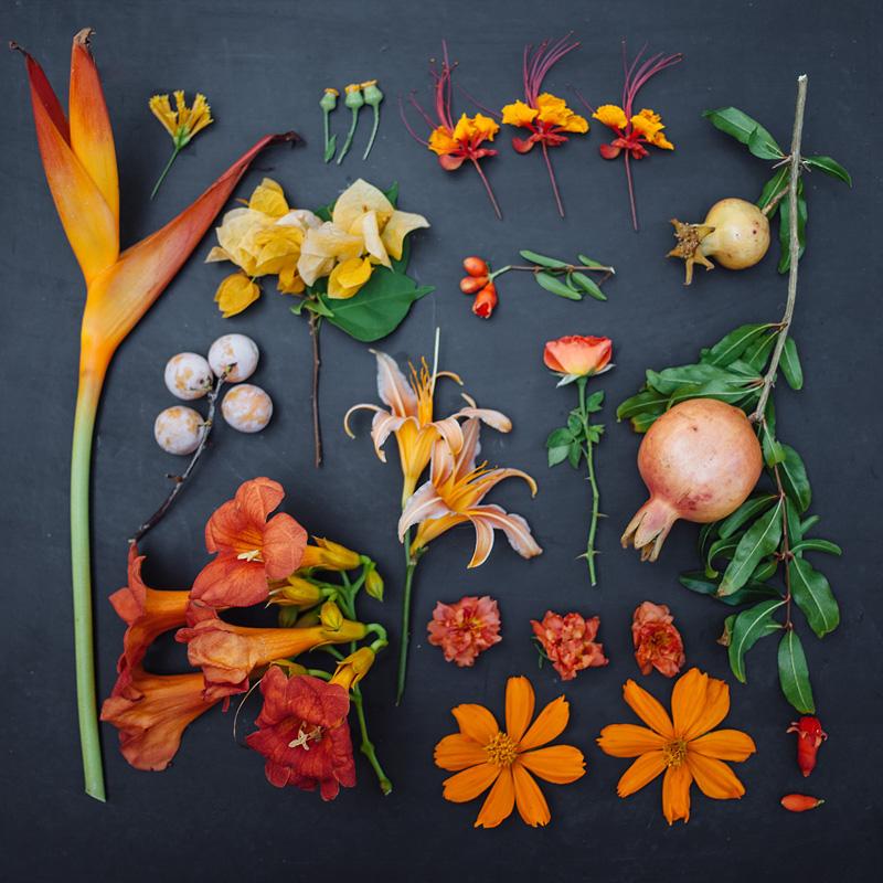 composition fleurs