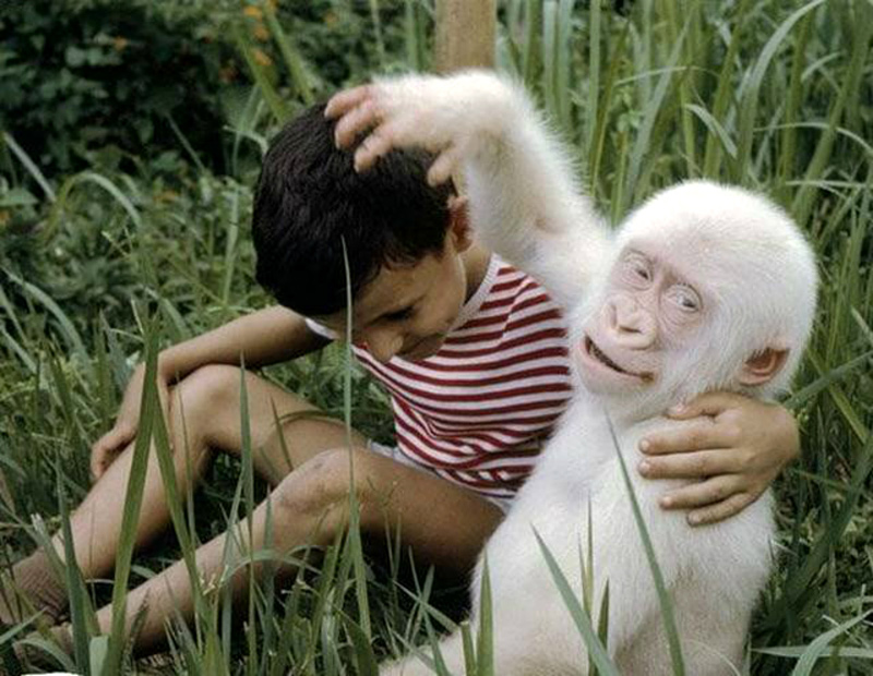 Singe albinos