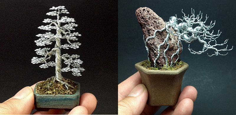 bonsai miniature