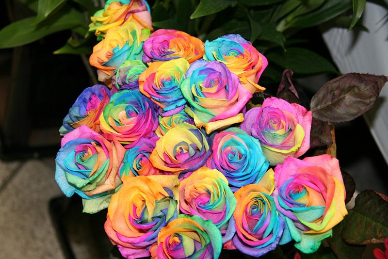 bouquet roses multicolores