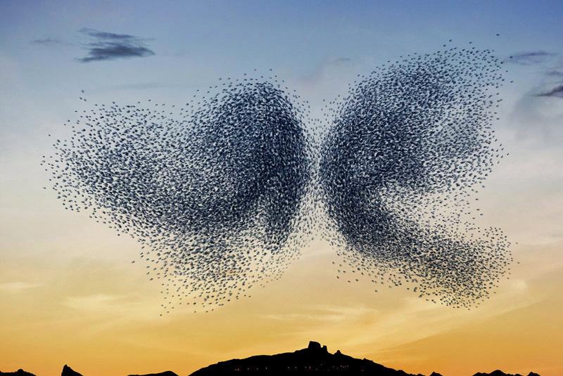 ballet d'oiseaux