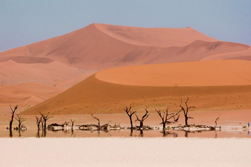 arbre de 900 ans en plein désert