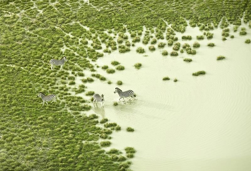 vue aérienne de la faune du Botswana