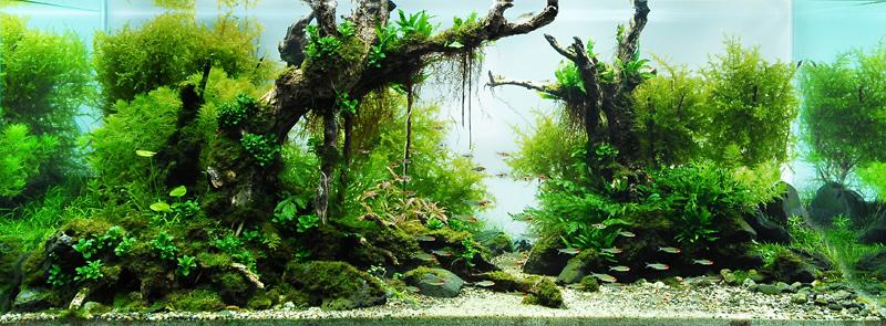 décoration plante d'aquarium