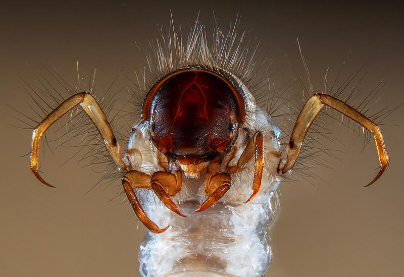 image macro d'une larve