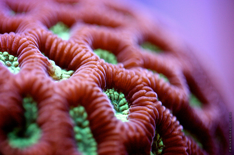 photo macro de corail