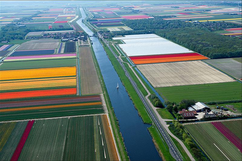 champs de tulipes aux Pays-Bas vu du ciel