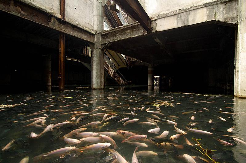 des poissons dans un centre commercial de Bangkok abandonné