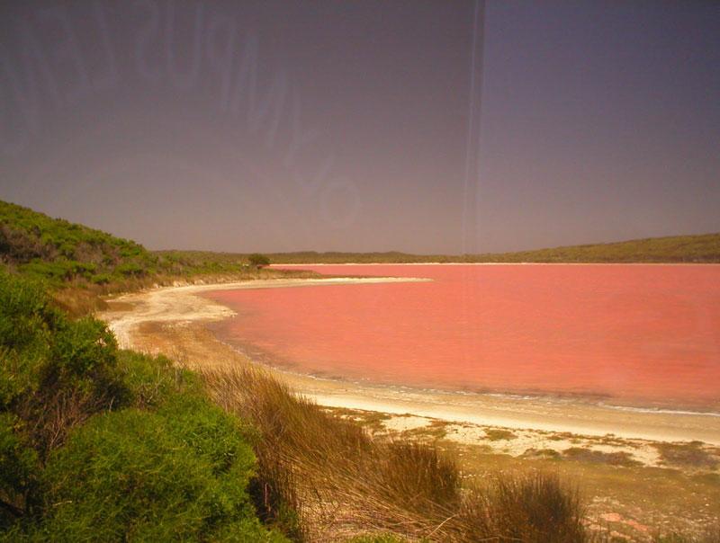 lac Hillier de couleur rose en Australie
