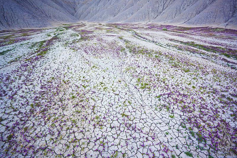 fleurs sur un sol désertique