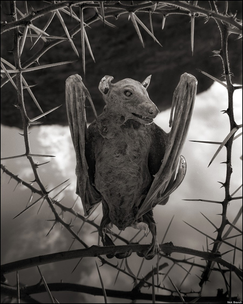 corps pétrifié d'un oiseau au lac Natron de Tanzanie