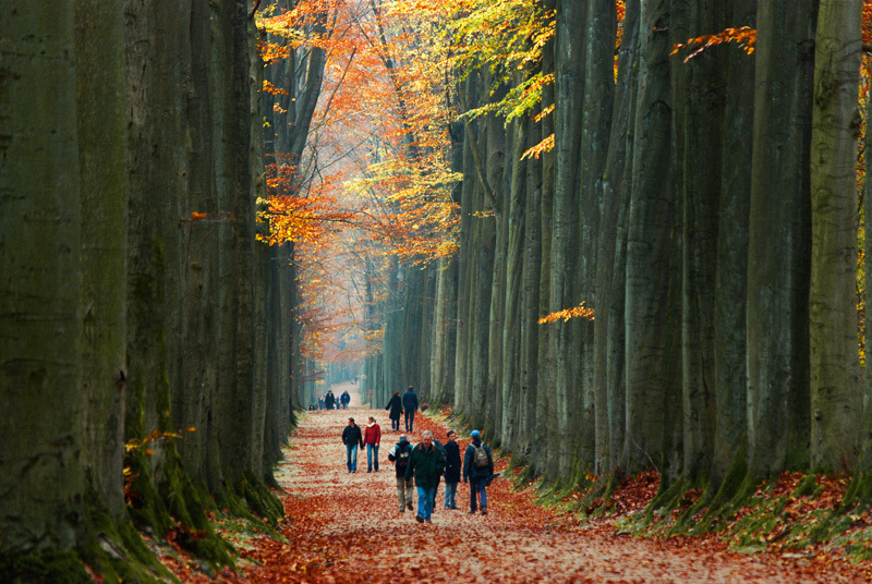 Allée d'arbres géants