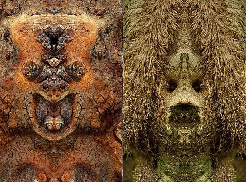 visage sur des écorces d'arbre
