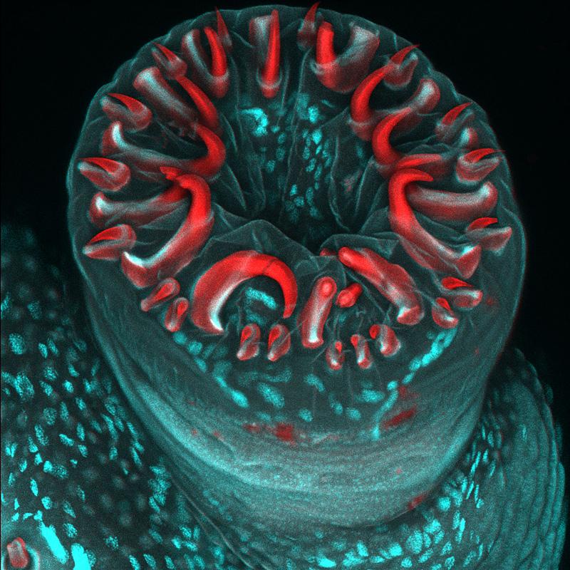 Photographie au microscope du concours Nikon