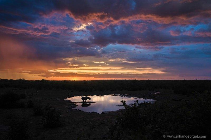 rhinocéros noir à un point d'eau à Etosha