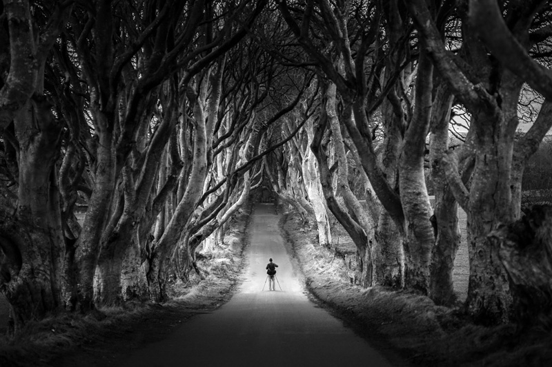 The Dark Hedges en Irlande du Nord