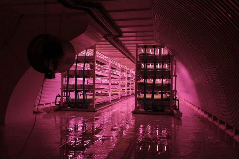 Abri anti bombardement de la Seconde Guerre mondiale à Londres transformé en la plus grande ferme souterraine du monde