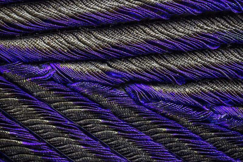 plumes de paon vues au microscope