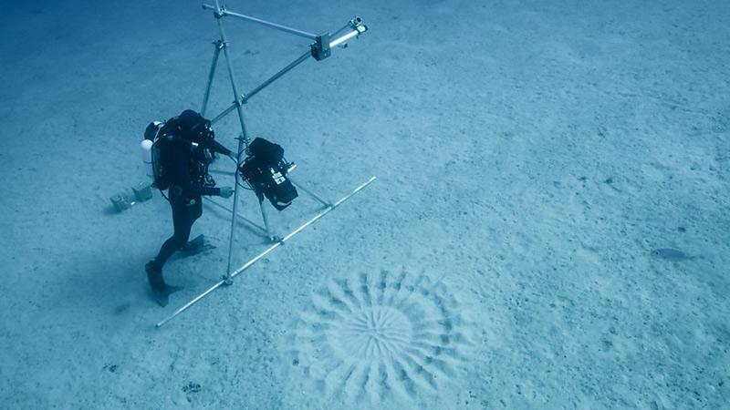 cercle sous-marin de poisson-globe