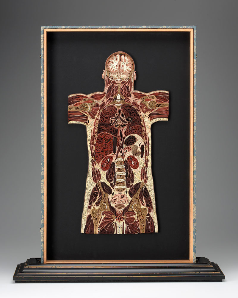 coupes anatomiques en papier