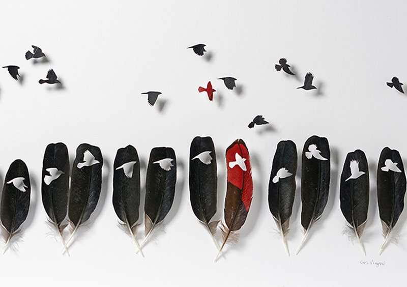 plume d'oiseau découpée