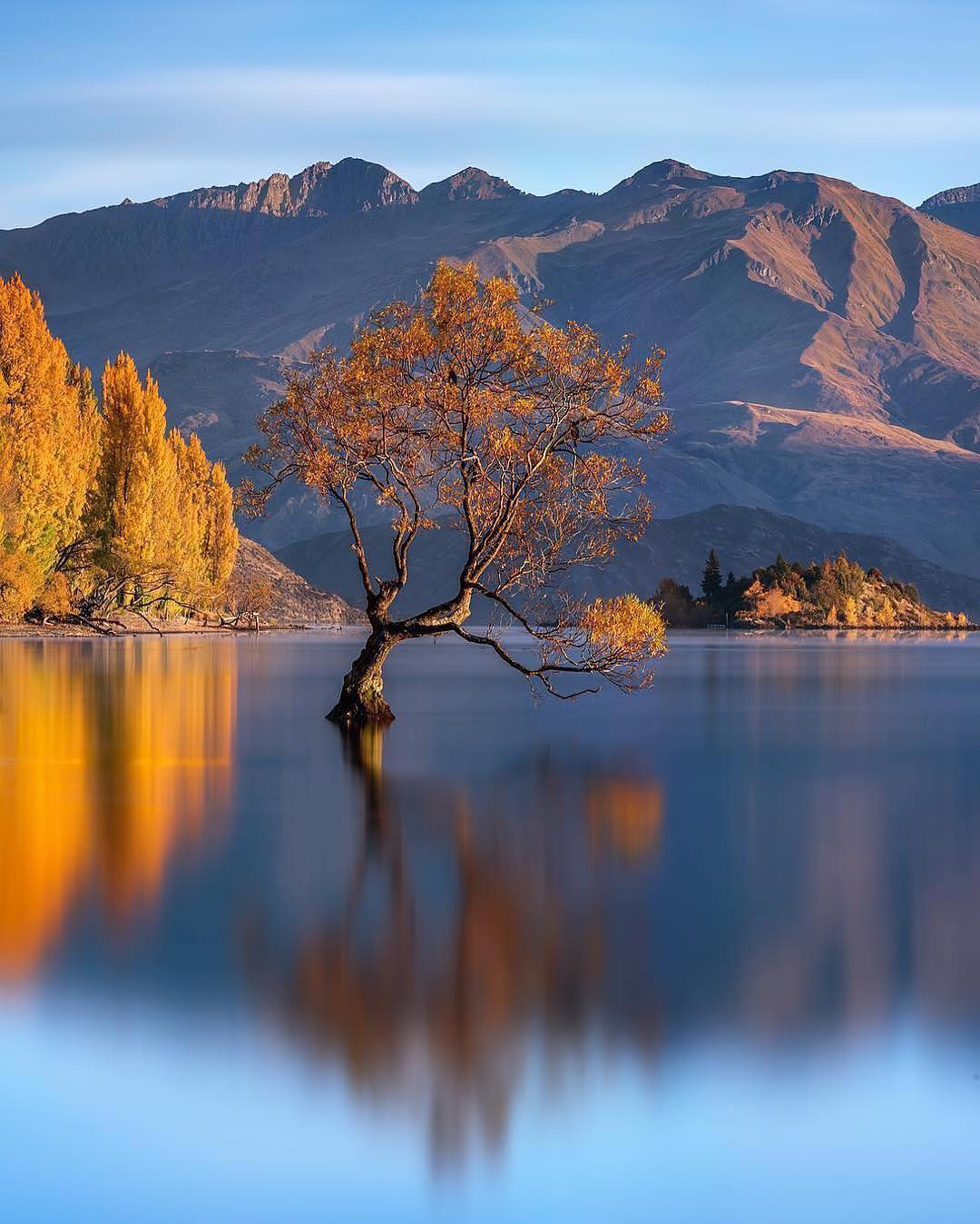 Arbre isolé sur le lac Wanaka en Nouvelle-Zélande