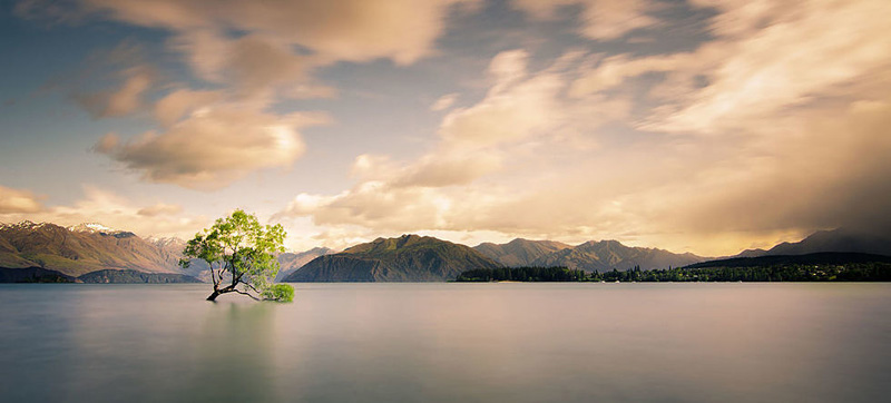 Arbre isolé au lac Wanaka en Nouvelle-Zélande