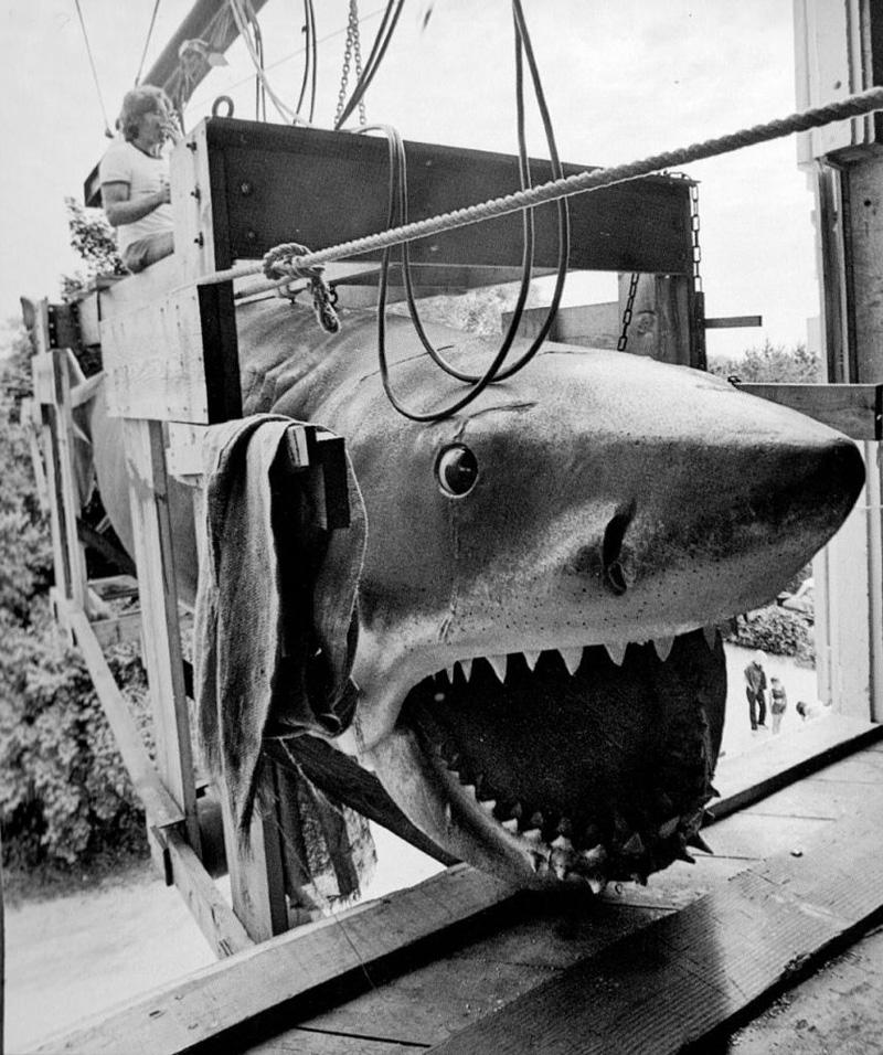 Les Dents de la mer en 1975