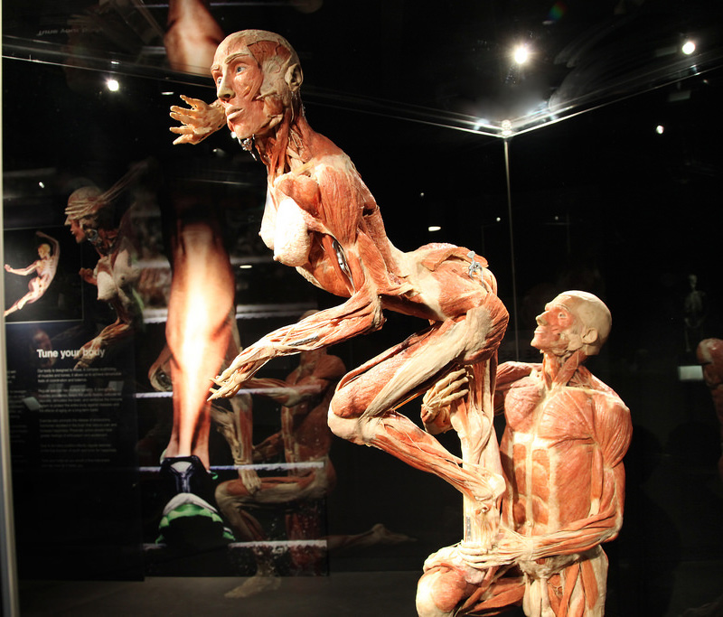 Exposition anatomique Body Worlds