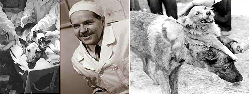 chien à 2 têtes de Vladimir Demikhov