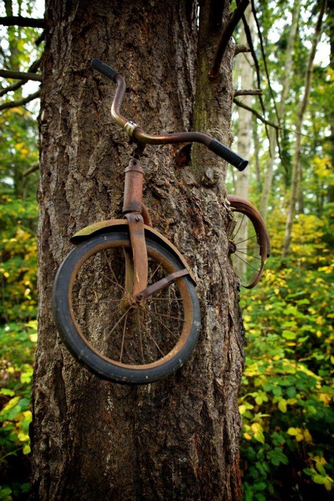 vélo dans un arbre
