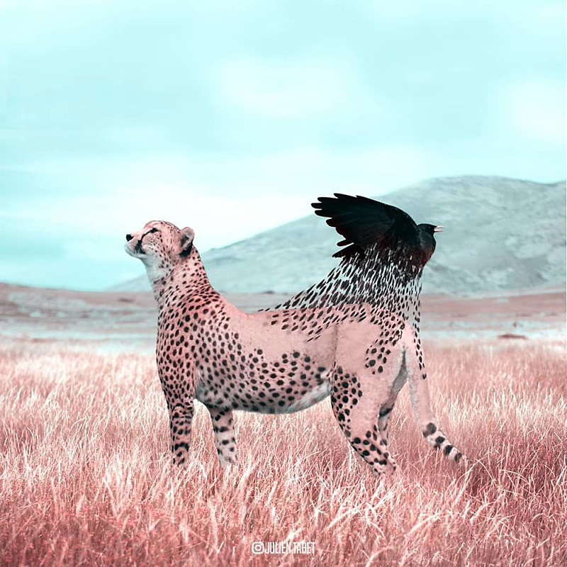 Images d'animaux fantastiques de Julien Tabet