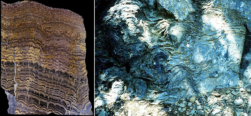 Stromatolithe