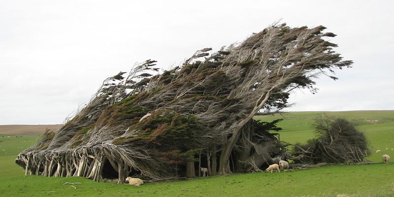 arbres mystérieux déformés par le vent