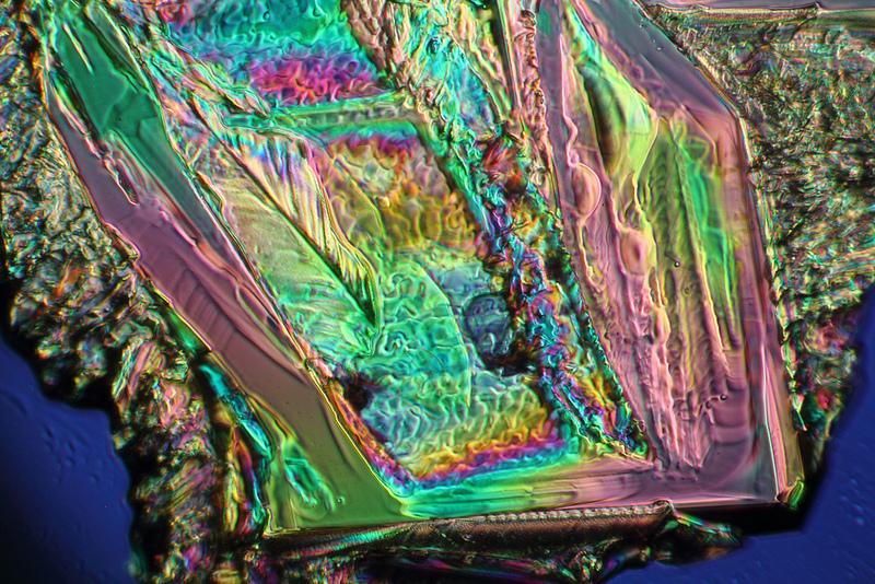 image prise au microscope