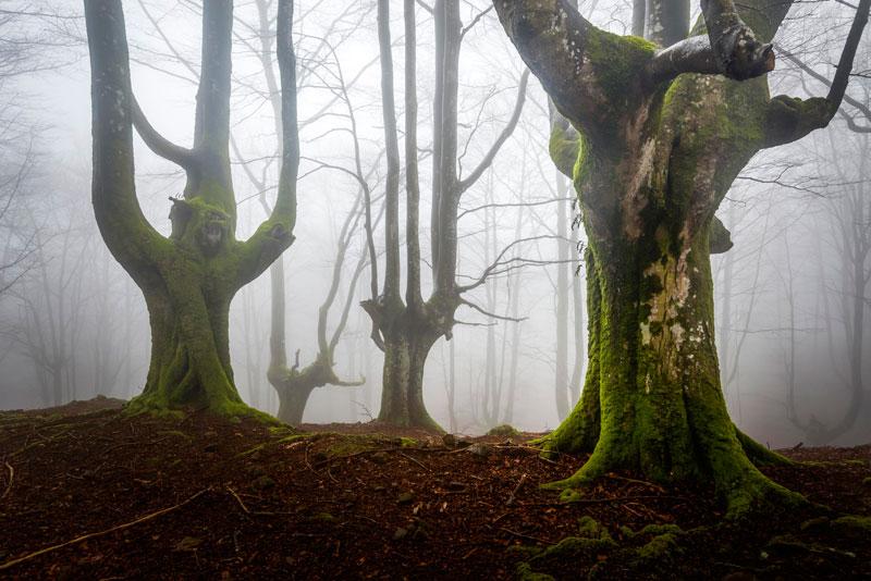 une forêt mystique en Espagne
