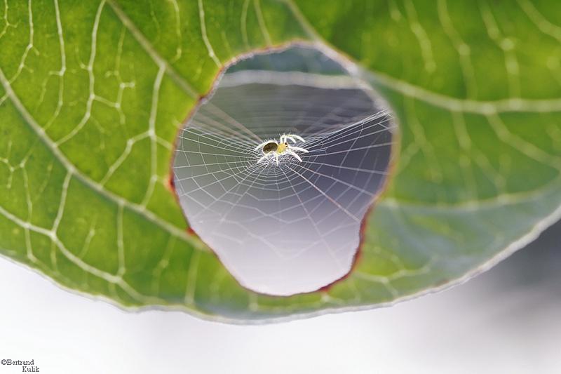 toile d'araignée dans une feuille