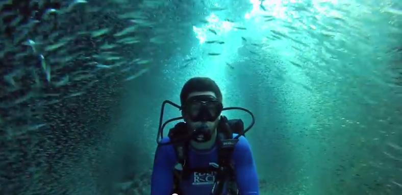 plongée proche de l'île de Grand Cayman